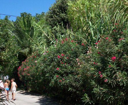 Camping ombragé sur la Presqu'île de Giens